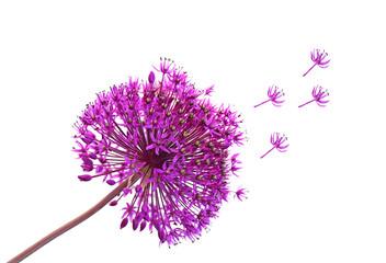 Alliums  Ornamental Onions