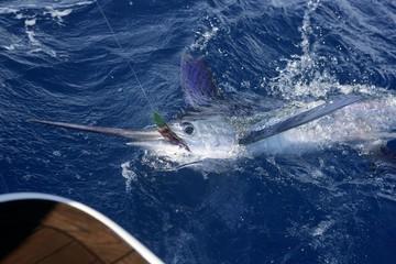 Tuinposter Vissen Atlantic white marlin big game sport fishing