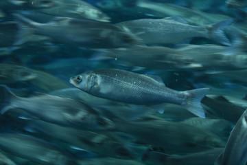 The fish closeup