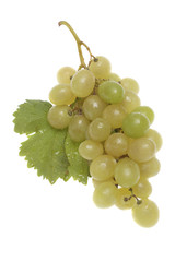 Bulgarian white grape cluster with leaves