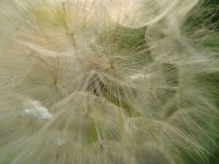 Canvas Prints Dandelions and water Warm (3)