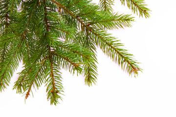 tannenbaum,hintergrund