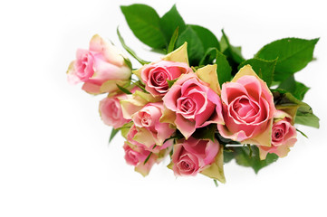 Pink roses bouquet on white background