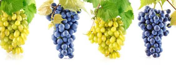 set blue and yellow grape fruits with leaves