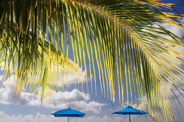 palme e ombrelloni