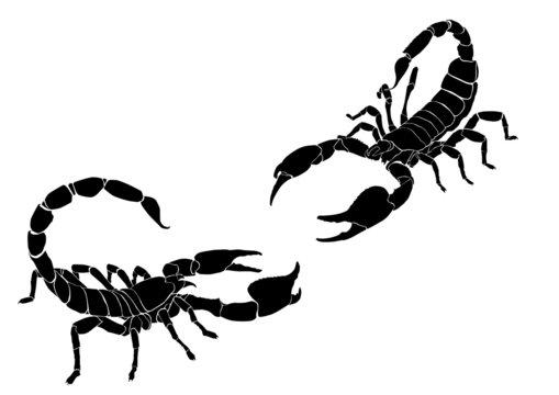 tattoo of the scorpio 2