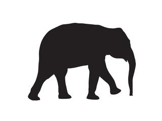 Elefant - Silhouette