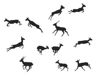 blackbuck antelope in  jumping gait