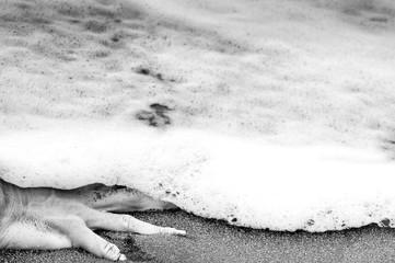 Mano en la orilla