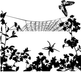 spider in flowers illustration