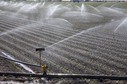 Bewässerungsanlage Lompoc USA