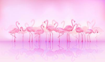 Flock of caribbean flamingos