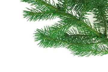 christmas branch fir-tree