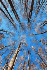 Da sotto in su, foresta
