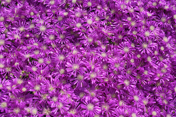 close up shot of a purple flowers