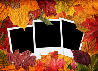 Blank photos in autumn leaves