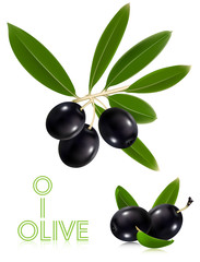 Photorealistic vector illustration. Black olives with leaves.
