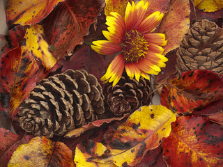 Close-up of autumn cones, leaves, and flower