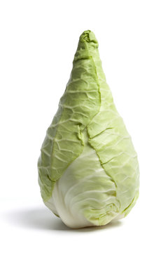 One whole pointed cabbage on white background