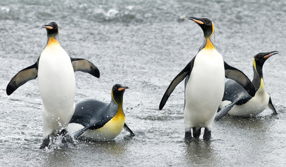 Penguin Fun in the Waves