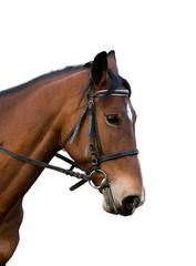 Bay horse.