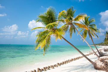 Palm trees hanging over a sandy white beach