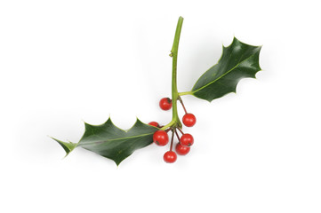 Small holly sprig with berries isolated on white