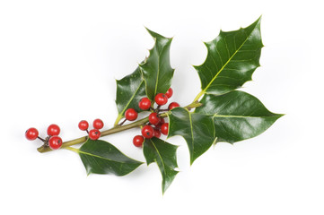 Holly sprig with berries isolated on white