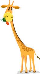 giraffe eating leaf