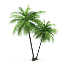 Green palm on a white background.