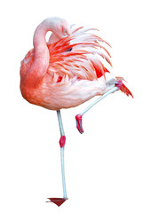 Détourage d'un flamant rose debout sur une patte