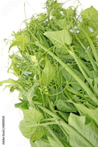 Brede Chouchou Legume Tropical Stock Photo And Royalty Free Images