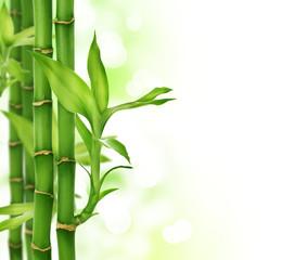 Fototapete - Bamboo border