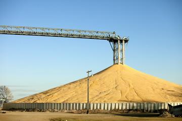 Immense pile of grain