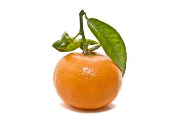 mandarina 2