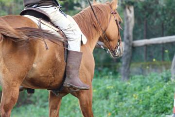 Passeggiata a cavallo in campagna