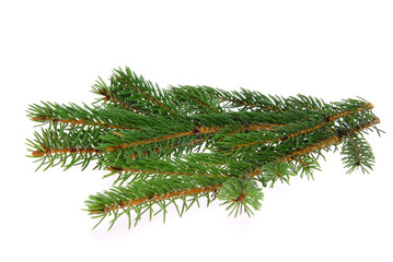 Tannenzweig - fir branch 07