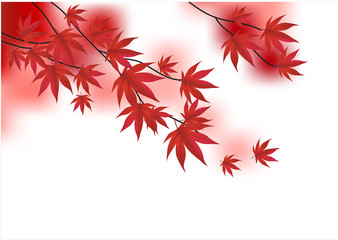 Red vector branch of maple