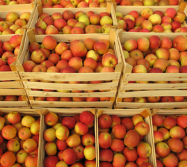 Apples in wooden crates on wholesale market
