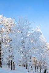 Fototapete - winter