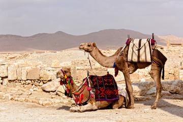 Syria - Palmyra (Tadmor)