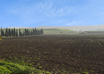 Field at Israel