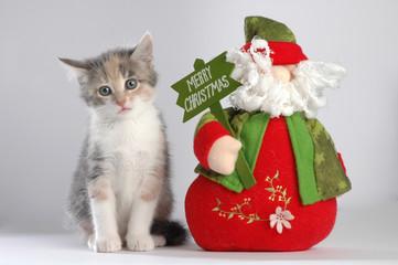Micio e Babbo Natale