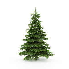 The Christmas tree ready to decorate