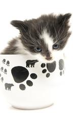 Little kitten in the cup.