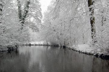 Branches recouvertes de neige au-dessus d'une rivière