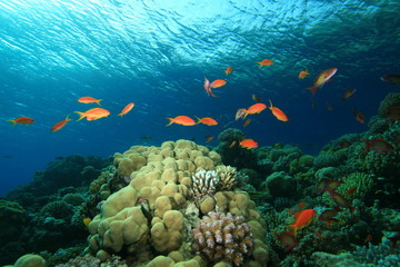 Beauty in Nature - Coral Reef