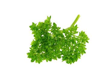 Petersilie - parsley 17