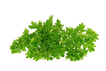 Petersilie - parsley 18