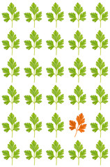 pattern from parsley